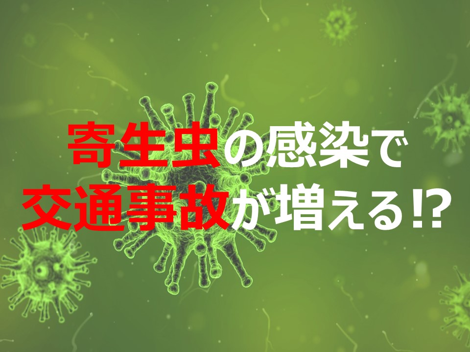 トキソプラズマの感染で交通事故が増える【寄生虫の症状】