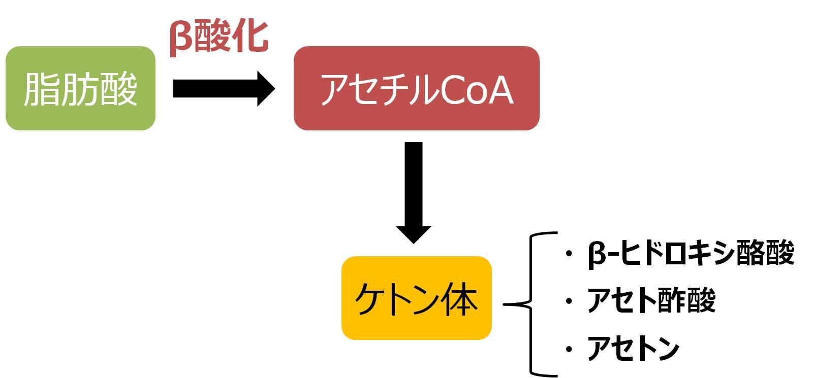 ケトン体 ヒドロキシ酪酸 アセト酢酸 アセトン