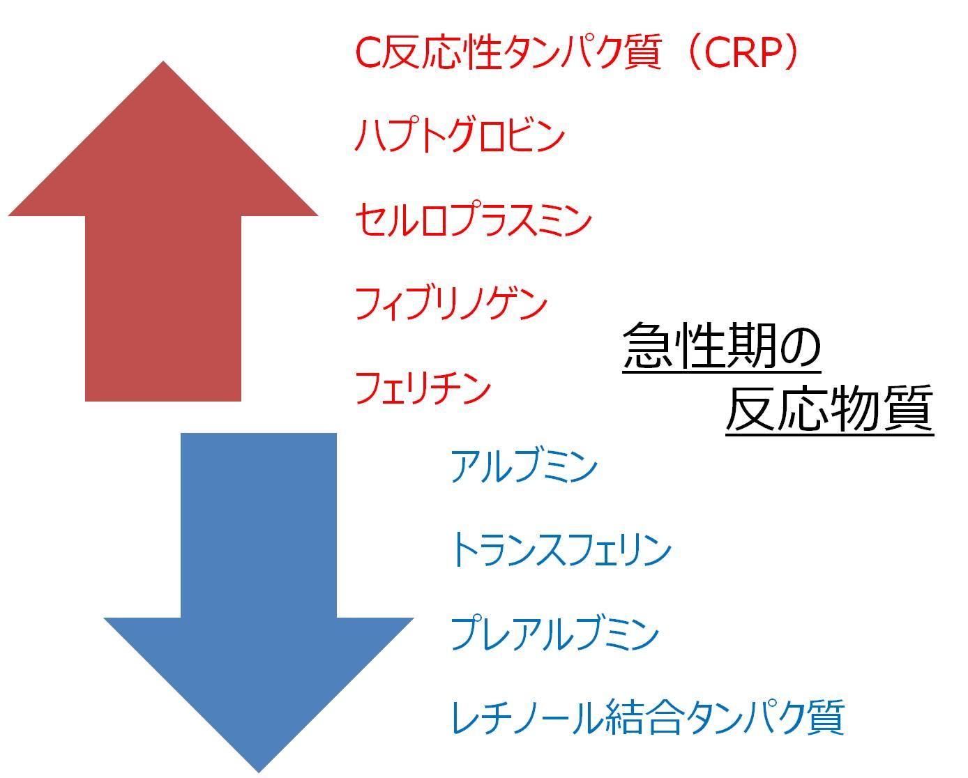 CRP 急性炎症 血液検査
