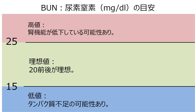 血液検査 BUN 基準値