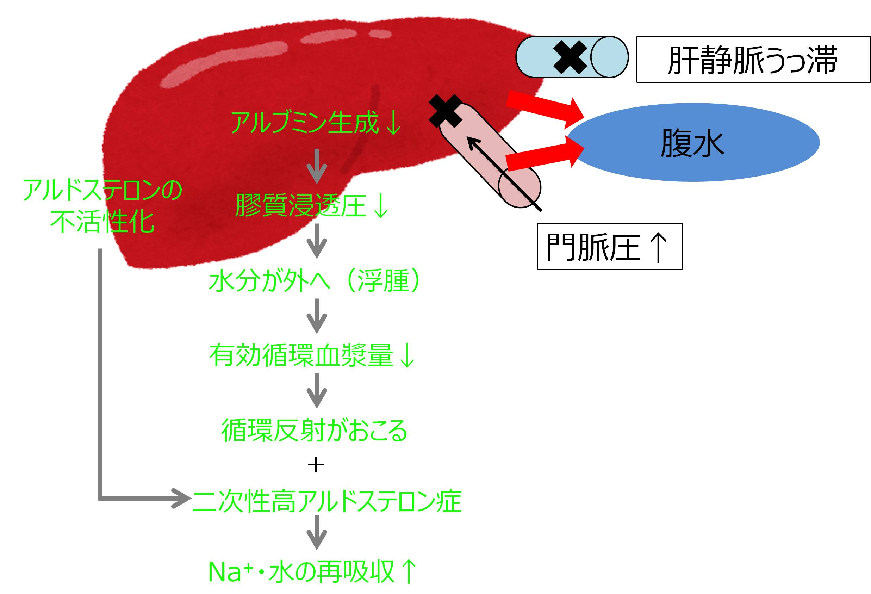 肝性浮腫 メカニズム